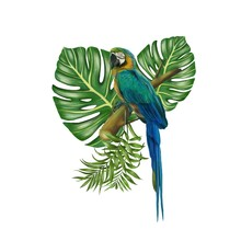 Parrot Botanical Green Leaf Hand Drawn Digital Painting Illustration White Background