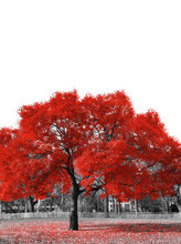 Big Red Tree In Black And White Landscape