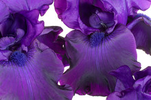 Iris Flowers Backgrounds