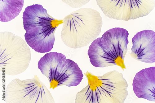 Acrylic Prints Pansies pansy petals on white