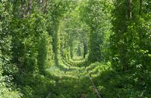 Railroad In Forest Formed A Green Tunnel. Tunnel Of Love In Sun Light In Ukraine, Klevan