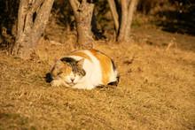 お昼寝中の三毛猫