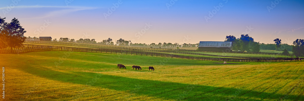 Fototapety, obrazy: Thoroughbred Horses Grazing at Sunset