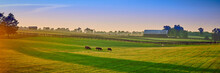 Thoroughbred Horses Grazing At...