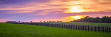 Thoroughbred Horses Grazing At Sunset