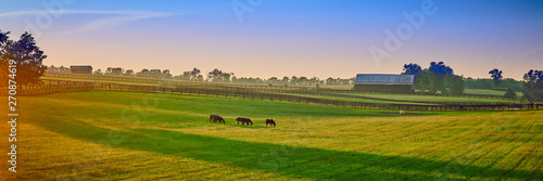 Foto op Canvas Paarden Thoroughbred Horses Grazing at Sunset