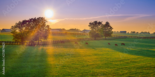 Photo Thoroughbred Horses Grazing at Sunset