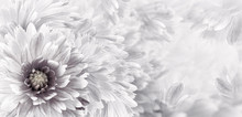 Floral Black-white Beautiful B...