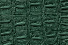 Dark Green Leather Texture Background, Closeup. Reptile Skin, Macro.