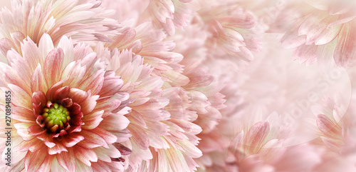 Cadres-photo bureau Dahlia Floral white-red beautiful background. Flowers and petals of a white-red dahlia. Close-up. Flower composition. Greeting card for the holiday. Nature.