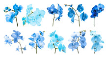 Set Of Different Blue Orchid F...