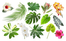 Set Of Fresh Tropical Leaves And Flowers On White Background