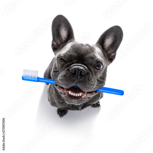 Recess Fitting Crazy dog dental toothbrush row of dogs