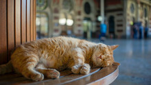 Stray Cat Sleeping On A Bench At Sirkeci Train Station, Istanbul, Turkey