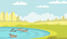 Wild Ducks Swim In Pond Flat Vector Illustration