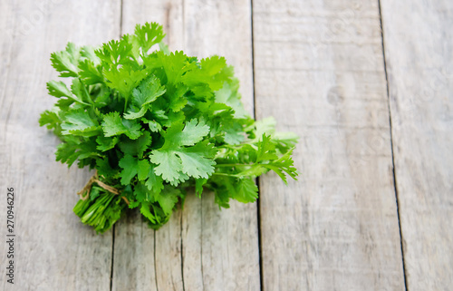 Fototapeta Fresh homemade greens from the garden. Selective focus. obraz