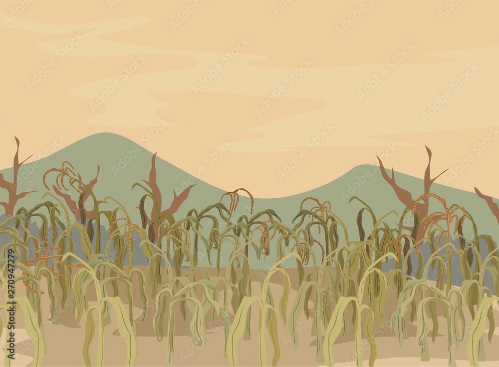 Fototapeta Corn Field Dying Crops Illustration