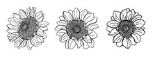 Set Of Hand Drawn Sunflowers. Ink Flowers Collection Isolated On White Background. Botanical Sketch.