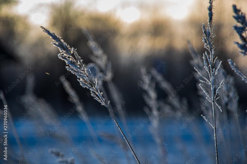 dry grass bents on blur background texture