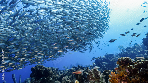 Cuadros en Lienzo  Bait ball in coral reef of Caribbean Sea around Curacao
