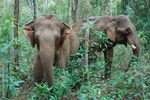 Photo Two elephants in Mondulkiri