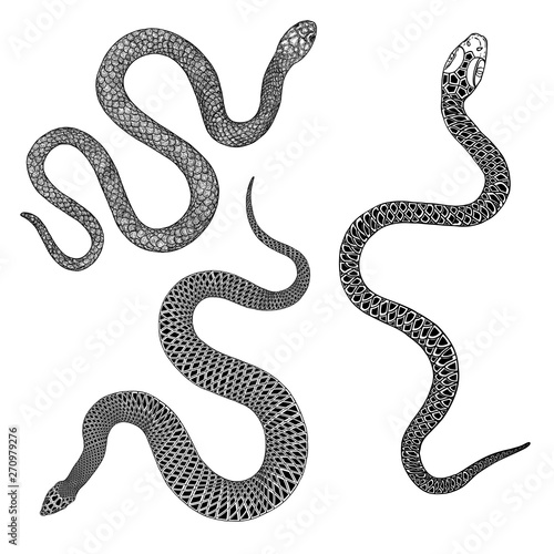 Fotomural  Set of snakes drawing illustration