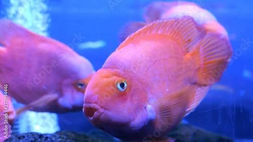 Big aquarium with uneven mu...