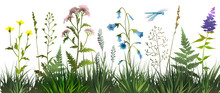 Meadow Wild Herbs And Flowers On White Background. Wildflowers. Floral Background. Wild Grass. Vector Illustration.
