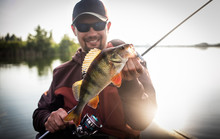 Happy Angler With Perch Fishin...