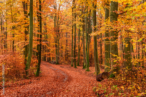 Stickers pour porte Orange eclat Brown and green forest in the autumn, Europe