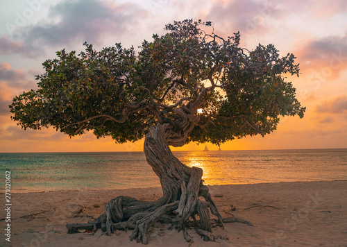 фотография Sunset Aruba Eagle Beach Divi Divi