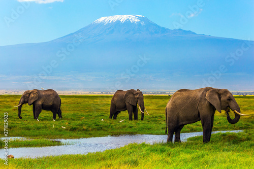 African elephants at Mount Kilimanjaro Wallpaper Mural