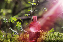 Magic Potion On Bottle In Forest