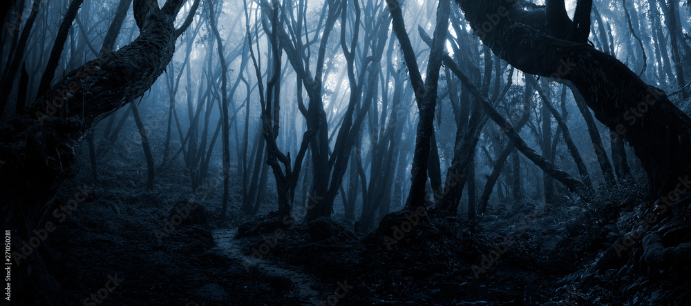 Fototapeta Deep tropical forest in darkness