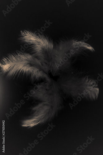 Foto-Fahne - Beautiful abstract color white gray and light pink feathers isolated on black background pattern and wallpaper (von Weerayuth)