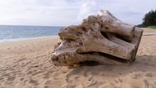 Big Driftwood On The Beach