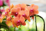 Beautiful orange orchids bloom in the summer