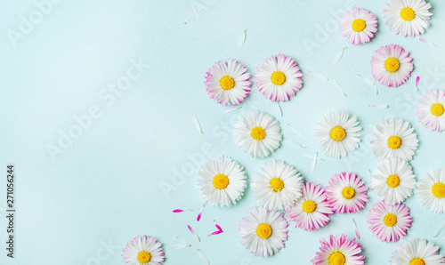 Summer pattern of daisy flowers on blue pastel table from above. Flat lay style.
