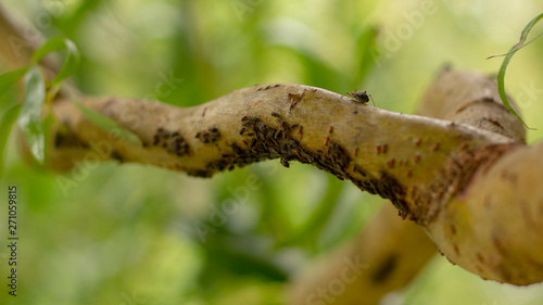black aphid on the green bark of a tree branch Wallpaper Mural