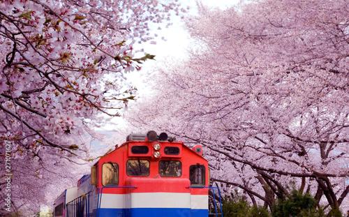 Full bloom of cherry blossom festival at Gyeonghwa railway station, Jinhae, South Korea Wallpaper Mural