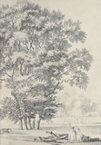 Drzewa - 271072476