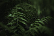 Leinwandbild Motiv fern in the dark forest