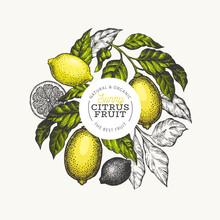 Lemon Tree Logo Template. Hand Drawn Vector Fruit Illustration. Engraved Style Banner. Vintage Citrus Design.