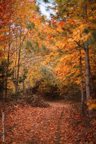 Foto op Plexiglas Oranje autumn in the forest