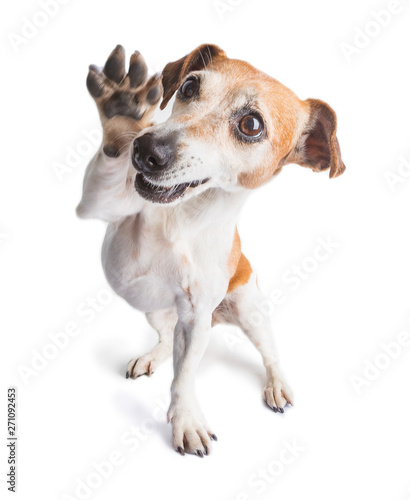 Fotografie, Obraz  Friendly waving paw dog
