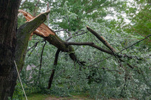 Severe Storm Damage To Residential Neighborhood Tree.