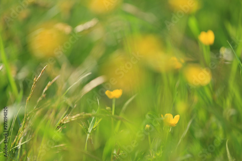 In de dag Narcis Blurred image of summer meadow