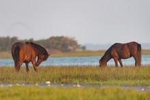 Wild Horses On The Rachel Cars...
