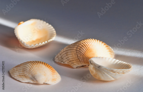 Poster Coquillage seashells on a beautiful background