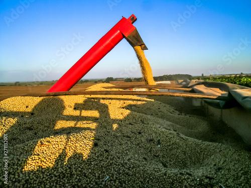 Fotografija  Soybean harvesting in Mato grosso state, Brazil
